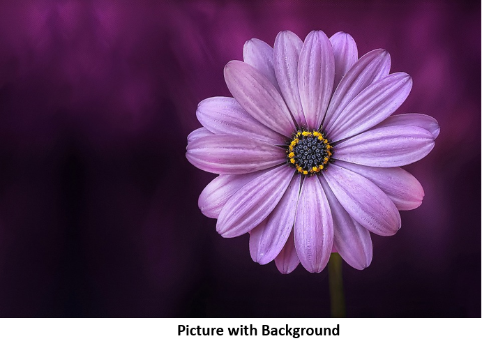 Flower Picture with Background