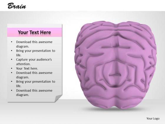 0814 Stock Photo 3d Model Of Human Brain PowerPoint Slide