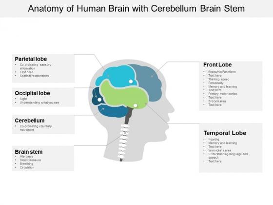 Anatomy Of Human Brain With Cerebellum Brain Stem Ppt
