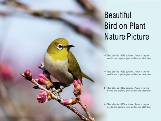 Beautiful Bird On Plant Nature Picture Ppt PowerPoint Presentation Ideas Model