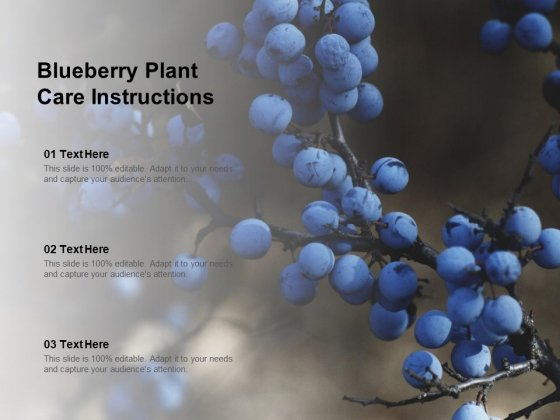 Blueberry Plant Care Instructions Ppt Powerpoint Presentation Ideas Demonstration