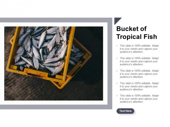 Bucket Of Tropical Fish Ppt Powerpoint Presentation Inspiration Background