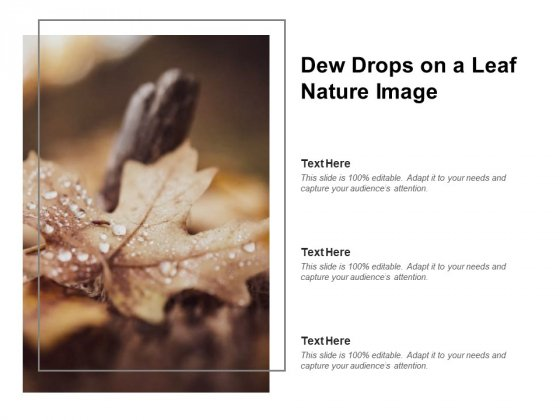 Dew Drops On A Leaf Nature Image Ppt PowerPoint Presentation Professional Layouts