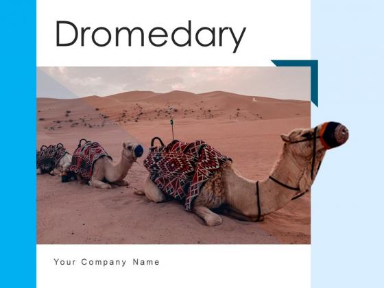 Dromedary Captivity Gear Ppt PowerPoint Presentation Complete Deck