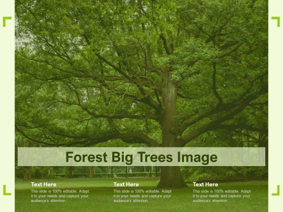 Forest Big Trees Image Ppt Styles Deck PDF