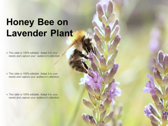 Honey Bee On Lavender Plant Ppt PowerPoint Presentation Portfolio Images