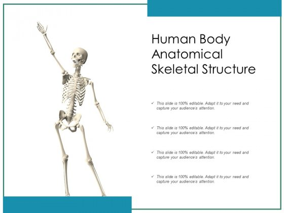 Human Body Anatomical Skeletal Structure Ppt PowerPoint Presentation File Backgrounds PDF