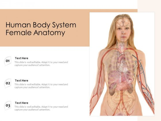 Human Body System Female Anatomy Ppt PowerPoint Presentation Icon Pictures PDF