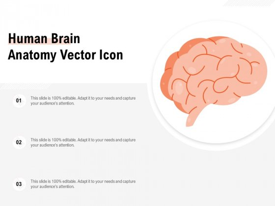 Human Brain Anatomy Vector Icon Ppt PowerPoint Presentation File Samples