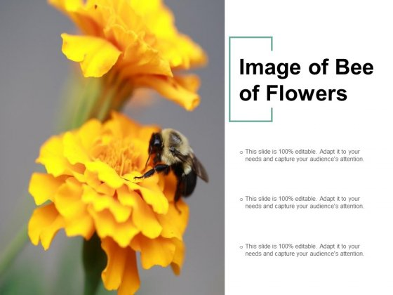 Image Of Bee Of Flowers Ppt PowerPoint Presentation Outline Visuals