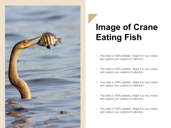 Image Of Crane Eating Fish Ppt Powerpoint Presentation Visual Aids Files