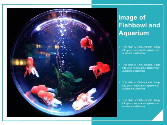 Image Of Fishbowl And Aquarium Ppt Powerpoint Presentation Infographics Design Inspiration