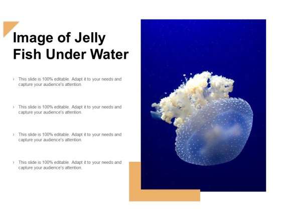 Image Of Jelly Fish Under Water Ppt Powerpoint Presentation Layouts Graphic Tips