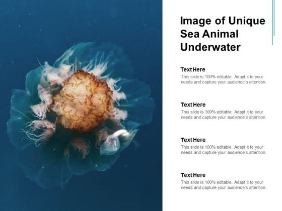 Image Of Unique Sea Animal Underwater Ppt PowerPoint Presentation Portfolio Clipart