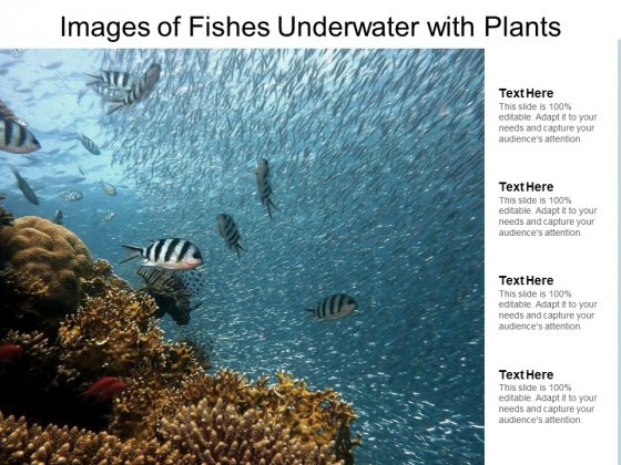 Images Of Fishes Underwater With Plants Ppt PowerPoint Presentation Outline Themes