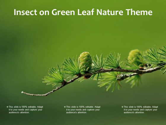 Insect On Green Leaf Nature Theme Ppt PowerPoint Presentation Gallery Layout Ideas