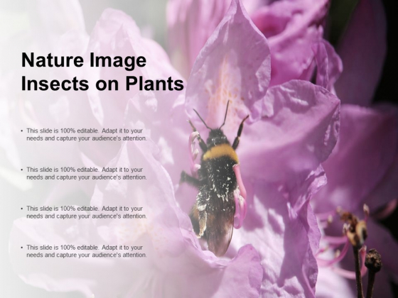 Nature Image Insects On Plants Ppt PowerPoint Presentation Styles Brochure