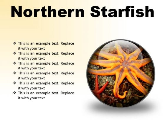 Northern Starfish Beach PowerPoint Presentation Slides C