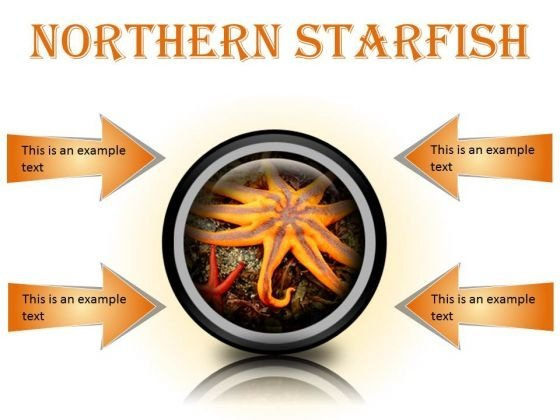 Northern Starfish Beach PowerPoint Presentation Slides Cc