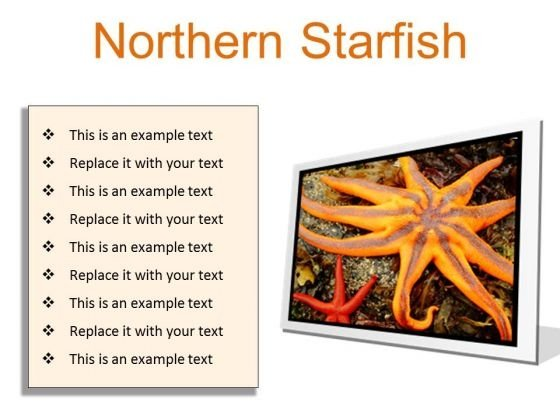 Northern Starfish Beach PowerPoint Presentation Slides F
