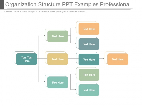 Organization Structure Ppt Examples Professional
