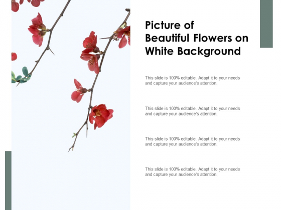 Picture Of Beautiful Flowers On White Background Ppt PowerPoint Presentation Inspiration Example