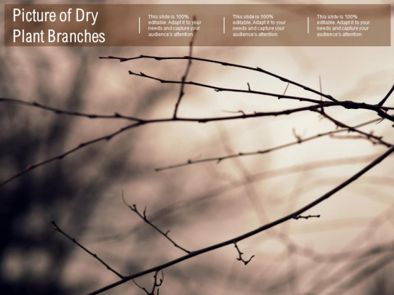 Picture Of Dry Plant Branches Ppt PowerPoint Presentation Inspiration Tips
