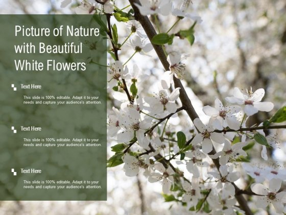 Picture Of Nature With Beautiful White Flowers Ppt PowerPoint Presentation Styles Graphics Template