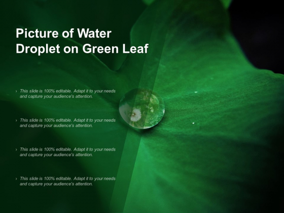 Picture Of Water Droplet On Green Leaf Ppt PowerPoint Presentation Layouts Slide