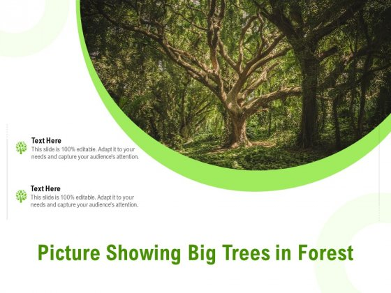 Picture Showing Big Trees In Forest Ppt Icon Summary PDF