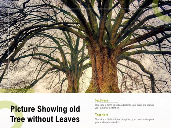 Picture Showing Old Tree Without Leaves Ppt Gallery Graphic Tips PDF