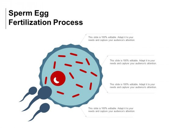Apologise, sperm egg fertilization well. opinion