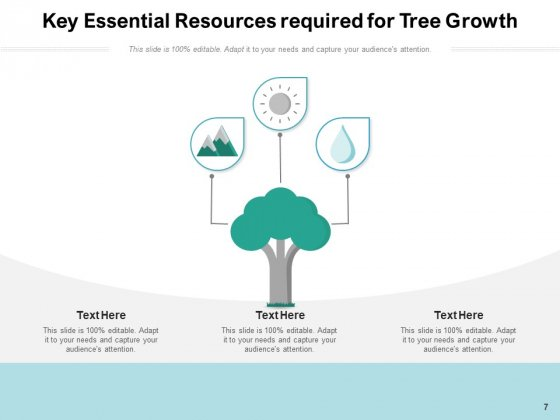 Stages_Of_Growing_Tree_Growth_Resources_Ppt_PowerPoint_Presentation_Complete_Deck_Slide_7