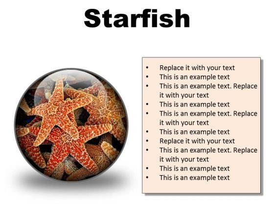Starfish Animals PowerPoint Presentation Slides C