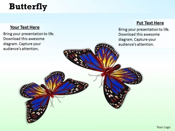 Stock Photo Butterflies With Bright Colors PowerPoint Slide