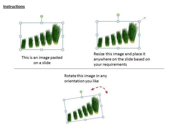 stock_photo_graph_of_growing_green_grass_powerpoint_slide_2