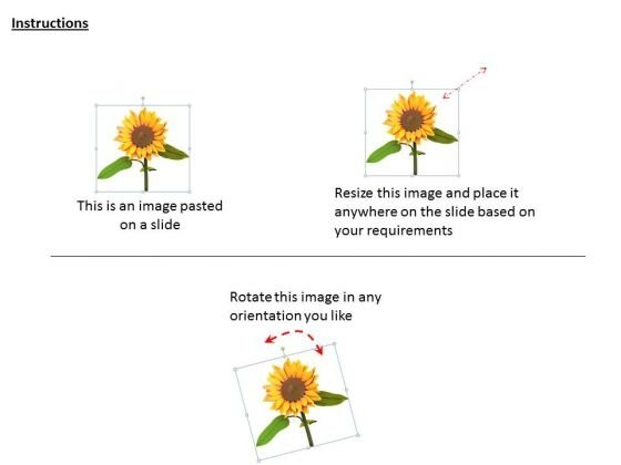stock_photo_graphic_of_sun_flower_powerpoint_template_2
