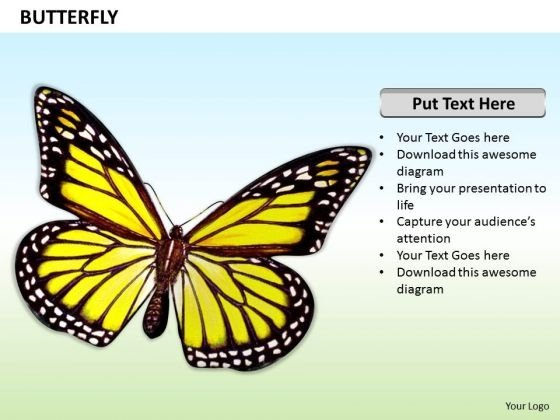 Stock Photo Illustration Of Beautiful Butterfly PowerPoint Slide