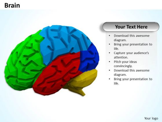 Stock Photo Multicolored Brain PowerPoint Slide