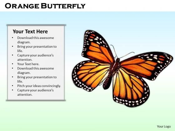 Stock Photo Orange Butterfly On Blue Background PowerPoint Slide