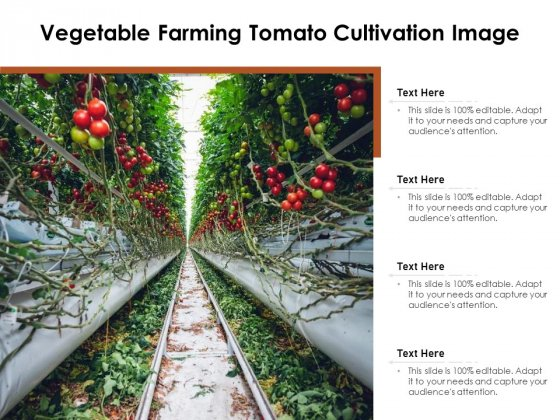 Vegetable Farming Tomato Cultivation Image Ppt PowerPoint Presentation Pictures Tips PDF