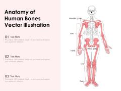 Anatomy Of Human Bones Vector Illustration Ppt PowerPoint Presentation File Portfolio PDF