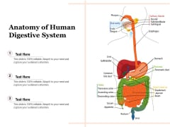 Anatomy Of Human Digestive System Ppt PowerPoint Presentation Summary Maker PDF