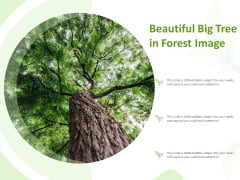 Beautiful Big Tree In Forest Image Ppt Model Infographics PDF