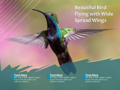 Beautiful Bird Flying With Wide Spread Wings Ppt PowerPoint Presentation Portfolio Tips PDF
