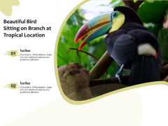 Beautiful Bird Sitting On Branch At Tropical Location Ppt PowerPoint Presentation Gallery Infographics PDF