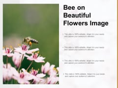 Bee On Beautiful Flowers Image Ppt PowerPoint Presentation Slides Gridlines