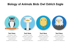 Biology Of Animals Birds Owl Ostrich Eagle Ppt PowerPoint Presentation Gallery Outline PDF