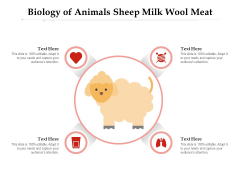 Biology Of Animals Sheep Milk Wool Meat Ppt PowerPoint Presentation Gallery Format PDF