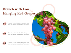 Branch With Low Hanging Red Grapes Ppt PowerPoint Presentation Gallery Smartart PDF
